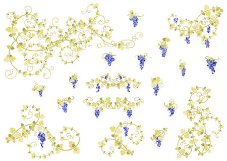 Stylized vine and clusters of grapes in gold and blue colors. Collection of elements for your design. photo