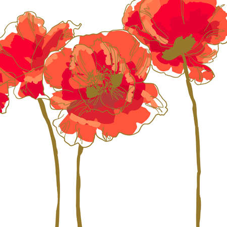 Three beautiful red poppy isolated on white background Illustration