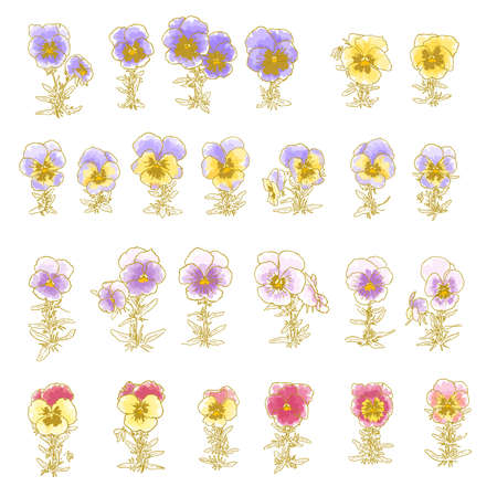 Collection of hand-drawn pansy isolated on white