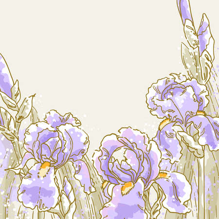 iris flower: Vector romantic floral background with iris Illustration