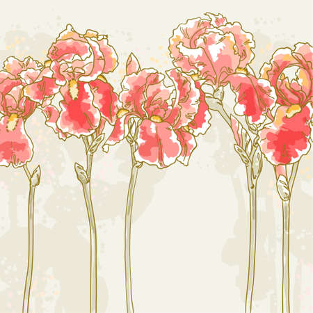 flowers close up: Vector romantic floral background with red iris Illustration
