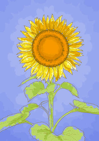 The contour drawing flower of sunflower against a blue background Vector