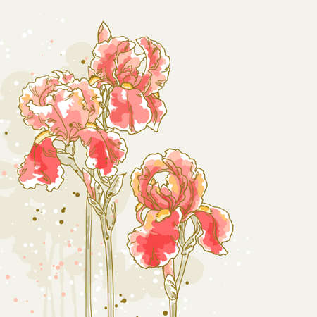 Vector romantic floral background with three red iris  Can be used as background for invitation cards  Vector
