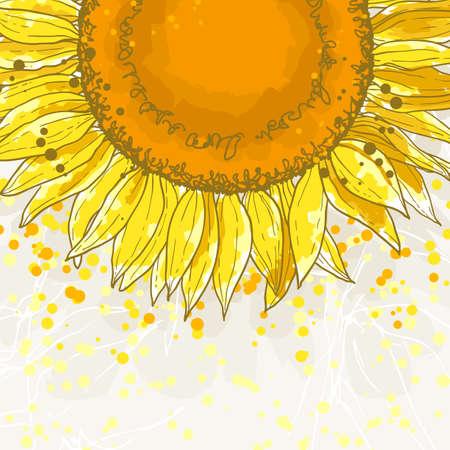 girasol: El dibujo del contorno de girasol flor puede ser utilizado como fondo para las tarjetas de invitaci�n