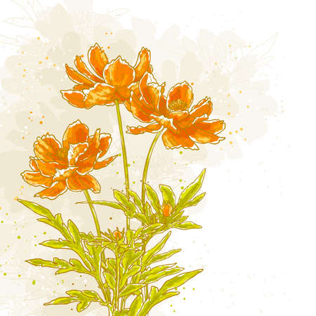 drawn cosmos flowers on textured background in watercolor style