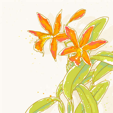 The contour drawing orchids flower with leafs  Can be used as background for invitation cards  Vector