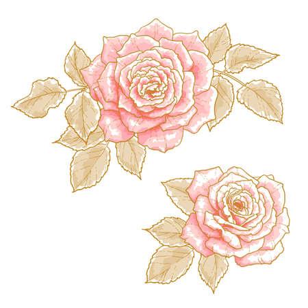 invitacion boda vintage: Dos rosas de color rosa con hojas, aisladas sobre un fondo blanco Los elementos de dise�o