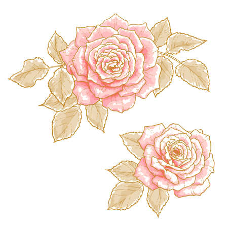 watercolour paintbrush: Two pink roses with leaves, isolated on a white background  Design elements