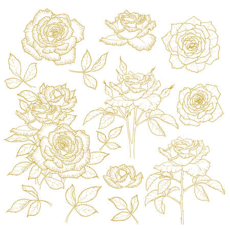 Set of one-colored outlined roses isolated on white background Stock Vector - 15627547