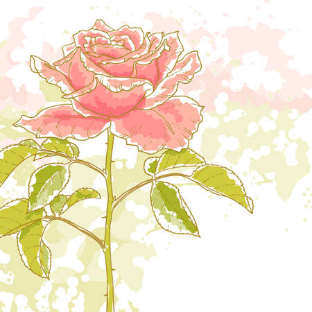 The contour drawing pink rose with leaves on white background  Watercolor style  Can be used as background for invitation cards   Vector