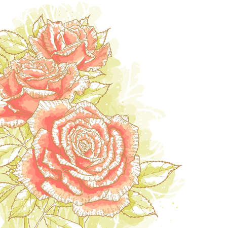 watercolour paper: The contour drawing pink roses with leaves on white background  Watercolor style  Can be used as background for invitation cards