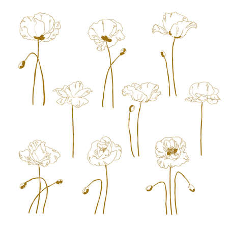 Set of one-colored outlined poppy isolated on white background Vector