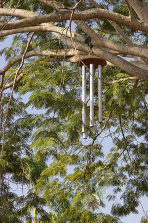 Giant Zen wind chimes on tree branch near the a Visitor