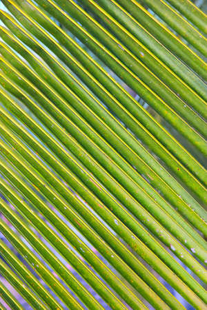 palm lined: Green palm leaf textured background Stock Photo