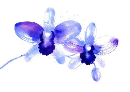 Branch of f beautiful blue vector watercolor orchids Illustration