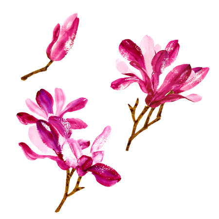 Element for you design - collection of red watercolor magnolia flowers Illustration