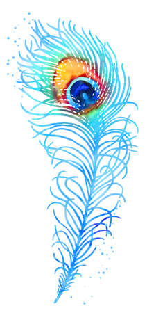 Elegant vector watercolor peacock feather, blue and orange