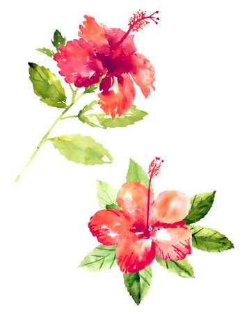 Set de fleurs d'hibiscus aquarelle rouge