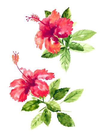 붉은 수채화 히비스커스 꽃 세트 일러스트