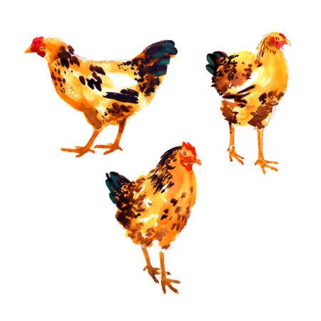 赤オレンジ色の水彩鶏およびオンドリとコレクション
