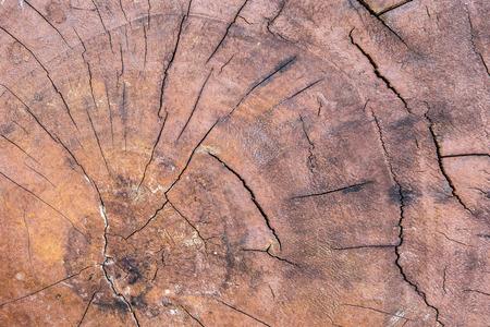 wood cut: close-up wood cut tree trunk texture