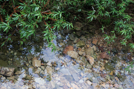geen: clear naural water in a forest with geen leaf Stock Photo