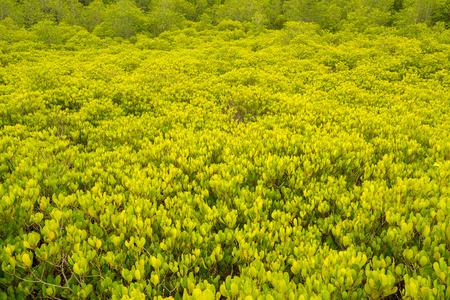 Unseen Thailand Travel Nature at Tung Prong Thong , Rayong Province, Thailand.