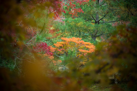 leaves color change Japan autumn season