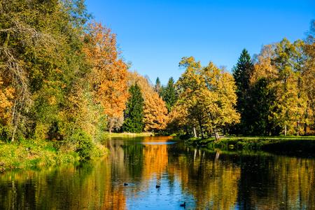 Beautiful autumn sunny landscape in Pavlovsk park with the Slavyanka river, red and orange leaves. Pavlovsk, St. Petersburg.