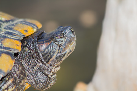 image of a turtle emerges from the shell.