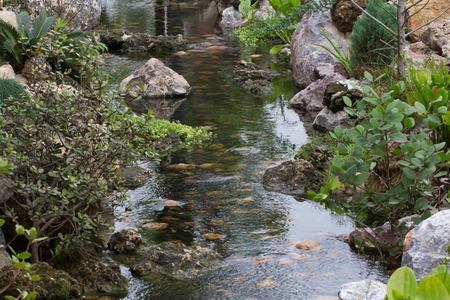 Streams created mimic nature and multi colored fish. Stock Photo