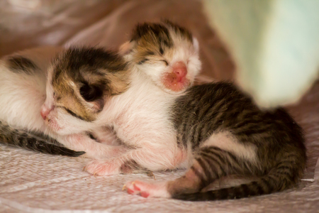 Two newly born kittens.