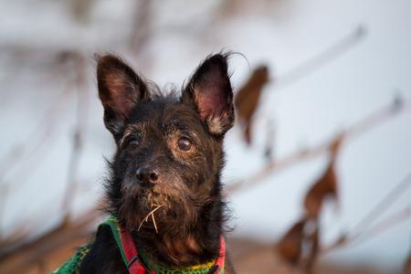 Cute pet dog black.