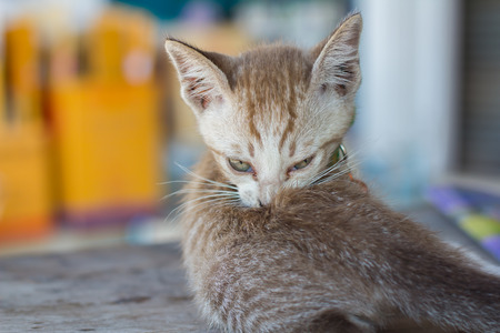 Cute kittens are cleaning themselves, licking their hair. Stock Photo