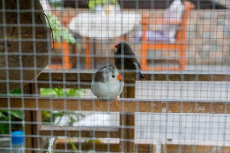 Cute Little bird have orange beak in the net cage.