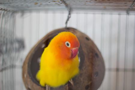 Colorful birds in the cage. Archivio Fotografico - 104875688
