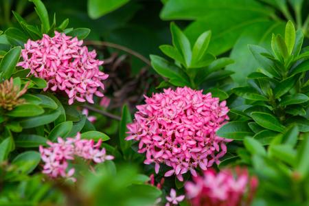 pink spike flower Archivio Fotografico