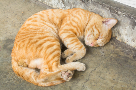 Male cats are sleeping happily.
