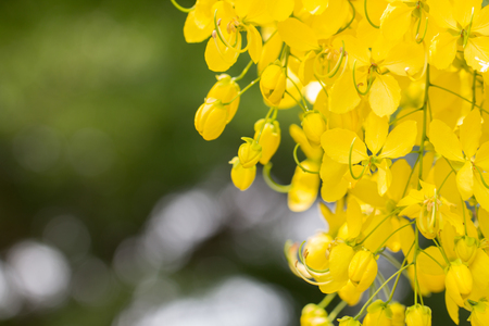 Closeup beautiful yellow flowers Archivio Fotografico - 104581592