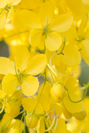 Closeup beautiful yellow flowers
