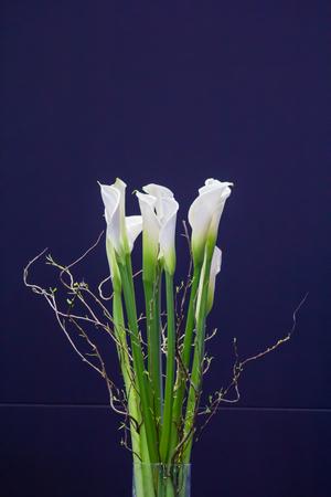 Closeup  beautiful white flowers.