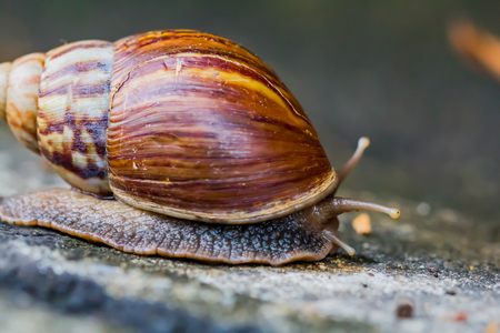 Snail on the cement floor that Select focus. Archivio Fotografico