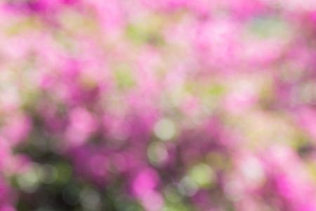 Blurred photo of Pink flowers are soft and beautiful. Archivio Fotografico - 105399626