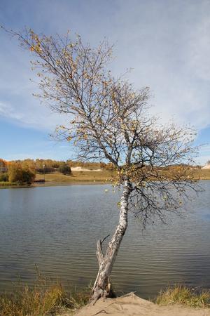 apoptosis: Tree