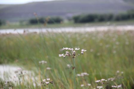 herbage: Hulun Buir Prairie Stock Photo