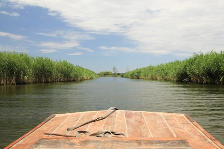 The reeds along the river  Stock fotó