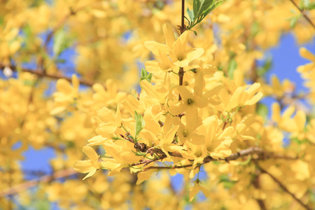 close up to yellow flowers growing on the tree