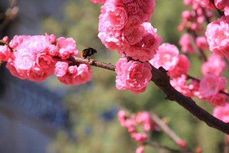 Close up to peach blossom Stock fotó
