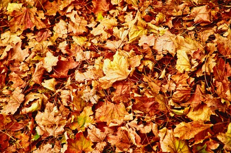 A lot of yellow and orange dry leaves lying on the ground photo