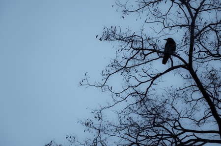 Crow is sitting on a tree against the sky. Halloween background Archivio Fotografico